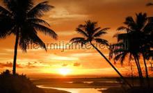 Sunset palms fotobehang Kleurmijninterieur Zon Zee Strand