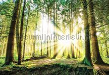 Sun in the forest fotobehang Kleurmijninterieur Bossen