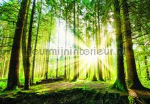 Light in the forest fotobehang Kleurmijninterieur Bossen
