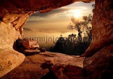 Foggy forest fotobehang Kleurmijninterieur Bossen