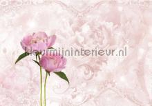 Pink peony fotobehang Kleurmijninterieur Bloemen---Planten