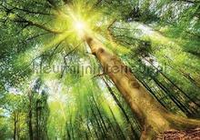 High trees fotobehang Kleurmijninterieur Bossen
