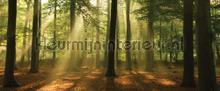 Wood panorama fotobehang Kleurmijninterieur Bossen