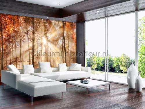 Kleur Mijn Interieur : Waterfall in autumn forest fotobehang landscape kleurmijninterieur
