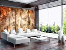 Sunny autumn forest photomural Kleurmijninterieur Mural room set photo's