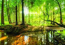 Creek fotobehang Kleurmijninterieur Bossen