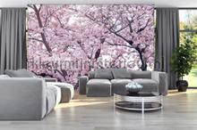 Apple flower blossom photomural Kleurmijninterieur Mural room set photo's