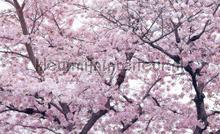 Apple flower blossom fotobehang Kleurmijninterieur Bloemen---Planten