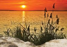 Sunset at the dunes fotobehang Kleurmijninterieur Zon Zee Strand