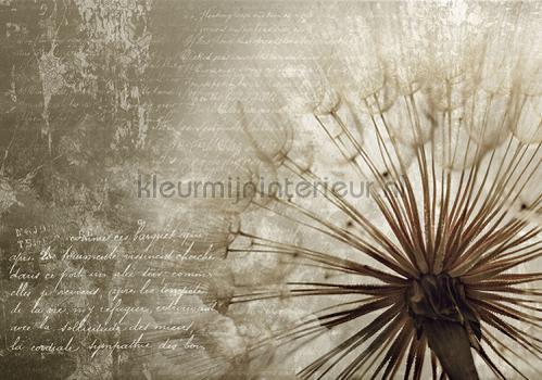 Dandelion poem papier murales 11683ve-l Art - Ambiance Kleurmijninterieur