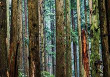Trees fotobehang Kleurmijninterieur Bossen