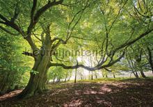 Old tree fottobehaang Kleurmijninterieur Zon Salou Blanes