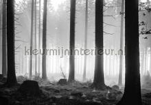 Black trees photomural Kleurmijninterieur all-images