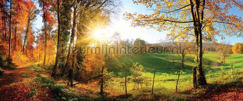 Serene woods fototapeten 12108pve-l Landscape Kleurmijninterieur
