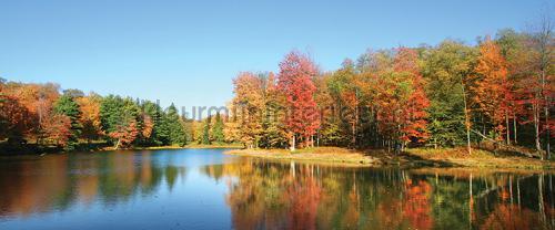 Autumn forest seen from water fototapeten 12113pve-l Landscape Kleurmijninterieur