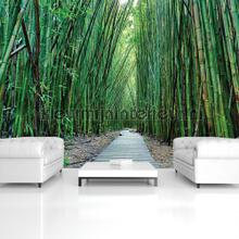Bamboo forest photomural Kleurmijninterieur all-images