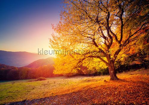 Tree fototapeten 12640ve-l Landscape Kleurmijninterieur