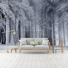Snowy forest photomural Kleurmijninterieur all-images