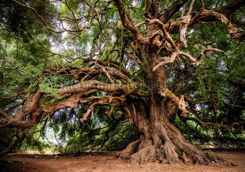 Authentic tree papier murales 13011ve-l Forêts Kleurmijninterieur