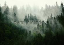 Foggy pine forest photomural Kleurmijninterieur all-images