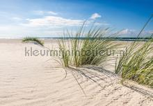 Dunes with blue sky photomural Kleurmijninterieur all-images