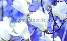 White flower on bleu background fotobehang Kleurmijninterieur Bloemen---Planten