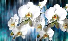 White orchids on blue background fotobehang Kleurmijninterieur Bloemen---Planten