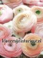 Rose pastels fototapeten Kleurmijninterieur alle-bilder