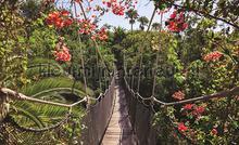 Tropical suspension bridge fototapeten Kleurmijninterieur alle-bilder