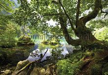 Riverside fotobehang Kleurmijninterieur Bossen