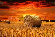 Haystack in the field fotobehang Kleurmijninterieur Zon Zee Strand