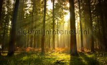 Forest fotobehang Kleurmijninterieur Bossen