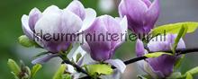 Magnolia fototapeten Kleurmijninterieur alle-bilder