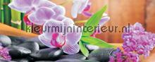 Orchid fototapeten Kleurmijninterieur alle-bilder