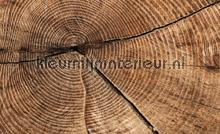 Wood grains fotobehang Kleurmijninterieur hout