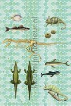 Amfibi stilleven fotobehang Onszelf Little Wallpaper OZP-3774