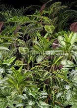 Planten tegen zwart achtergrond papier murales Behang Expresse Looks ak1063