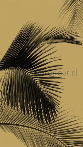 honey palm photomural MLG101292098 Moonlight Caselio