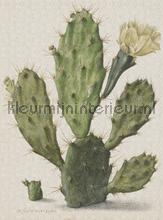 Blooming cactus fotobehang Dutch Wallcoverings Kunst Ambiance