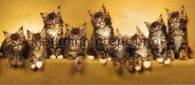 Katjes op een rij fototapet AG Design verdenskort