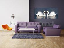 Twee witte zwanen fototapeten AG Design weltkarten