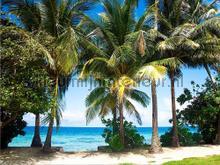 Palmenstrand fototapet AG Design verdenskort
