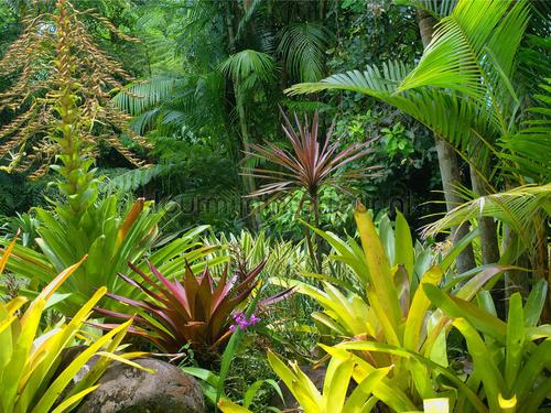 Tropische jungle fotomurali ftn-xxl-2490 giungla AG Design