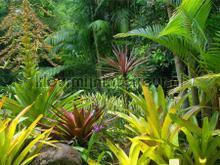 Tropische jungle fotomurali AG Design sport