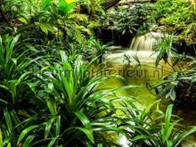 Tropische waterval fototapet AG Design verdenskort