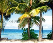 Palmbeach fotobehang AG Design Zon Zee Strand