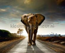 Elephant coming photomural AG Design Photoprints-wall-collection