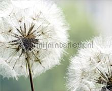 Dandelions still photomural AG Design Photoprints-wall-collection