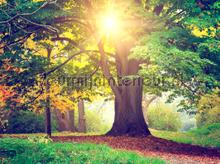 Sunny tree photomural AG Design Photoprints-wall-collection