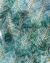 Palm canopy fotomurali Komar sport
